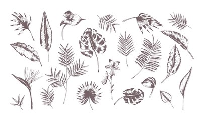 Set of exotic leaves of different plants hand drawn with contour lines on white background. Collection of tropical foliage of various size and shape. Monochrome realistic vector illustration.