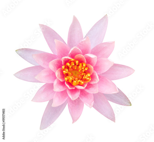 Light Pink Color Lotus Flower Top View Isolated On White Background