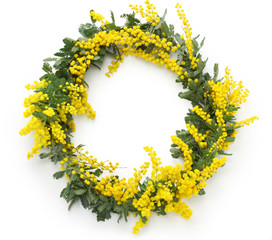 mimosa wreath isolated on white background