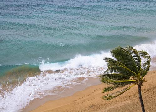 Waves Break on Windy Beach with Palm Tree
