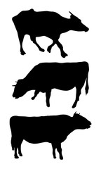 Set of cow silhouettes