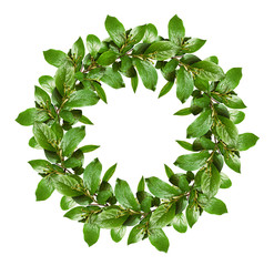 Spring wreath with green leaves and small flower buds