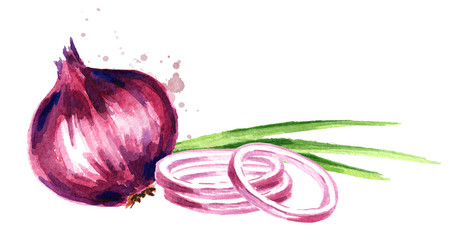 Onion horizontal composition. Watercolor hand drawn illustration, isolated on white background