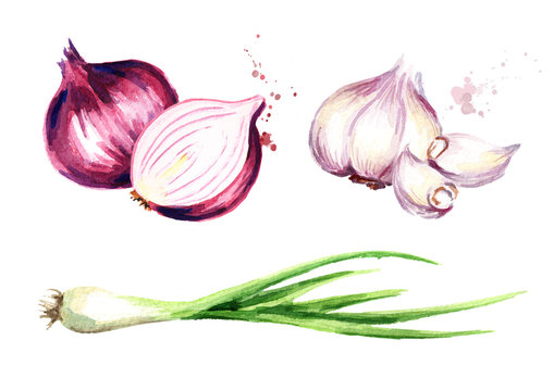 Onion, green chive and garlic set. Watercolor hand drawn illustration, isolated on white background