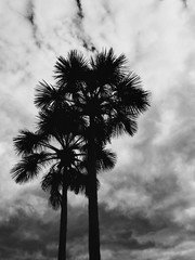 Black and White Shot of Two Palm Trees Against Cloudy Moody Sky