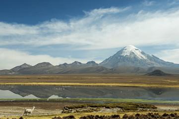Snowcapped volcano Sajama with flamingos, Sajama National Park, Bolvia