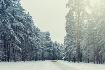 Winter forest of public park. Pine trees covered with snow. Winter scenery.