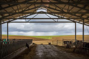 Una granja de vaca típica (negocio de leche, agroindustria, comercio - concepto)