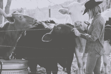 Agriculture cattle industry shows strong woman in western wear and cowboy hat feeding pet cows on Texas farm.