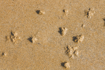 Numerous sand swirls on sea shore made by sandworms. While burrowing they produce coiled castings visible at low tide