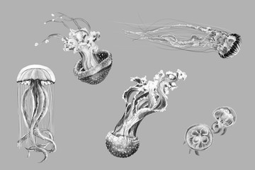 Black and white hand-drawing sketches of jellyfish