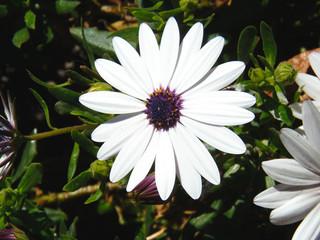 Flor blanca, con estambres amarillos y morados