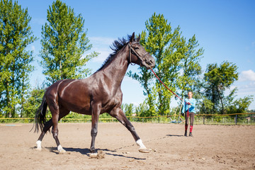 Young woman training horse on cord in padock on summer day. Horse galloping in corral