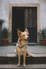 Cute Yellow Dog