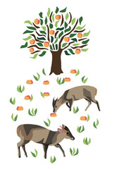 Two muntjac deer by a fruit tree