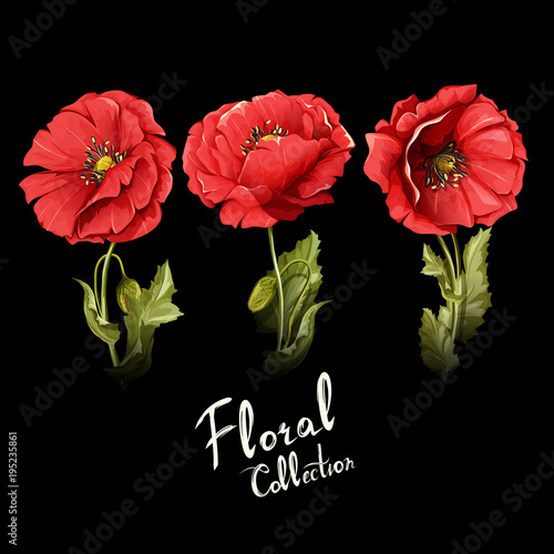 Floral collection poppy flowers illustration of three poppy buds floral collection poppy flowers illustration of three poppy buds with stem and leaves mightylinksfo