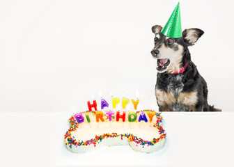 Dog Blowing Out Birthday Candles