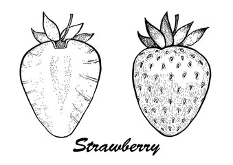Hand drawn vector illustration -strawberry and in a section. Detailed vegetarian food. Elements collection for design.