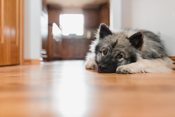 Doggie nap