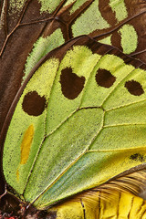 Close up of butterfly wings