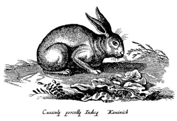 rabbit sitting on a meadow in the countryside (after a vintage woodcut, illustration, engraving from the 17th century)