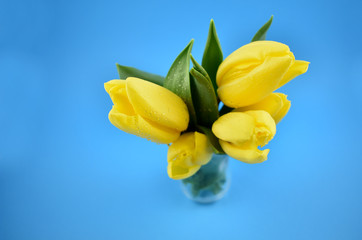 Yellow tulips stock images. Yellow tulips on blue background. Spring floral decoration. Spring background concept. Yellow tulips bouquet in vase