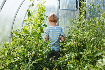 Back view shot of blond toddler in greenhouse