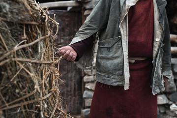 Local farmer working in a village, Ladakh, North India