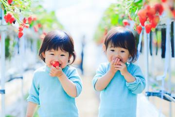 子供とイチゴ狩り