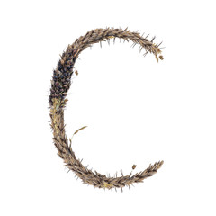 letter C of dried sorghum spikelets, blade of grass and corn inflorescences, isolate on white background