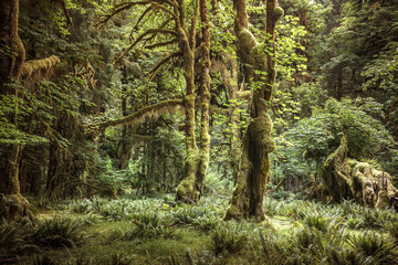 Hoh Rain Forest, Olympic National Park, Washington, USA