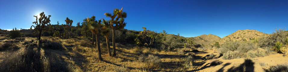 Joshua Tree Panoramic Landscape