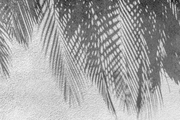 ombres de palmes sur mur en crépi