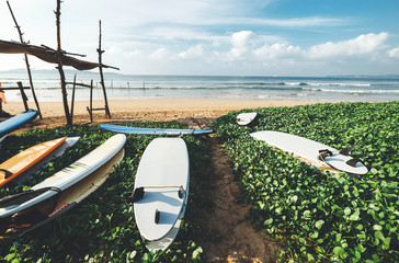Surfboards are on the beach at erly morning time on the surf point in Sri Lanka