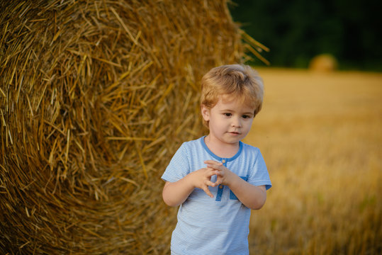 Summer, harvest season