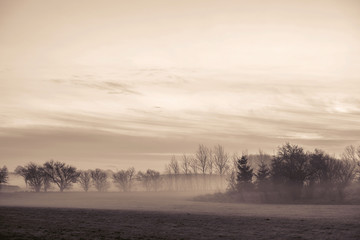 Morning mist with tree silhouettes in November