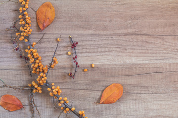 Branch of common sea buckthorn with berry and dogwood, dried autumn yellow leafs
