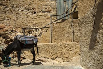 Tunisian Donky