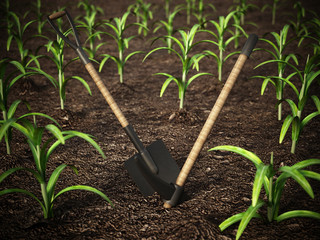 Shovel and pick axe standing on the corn field. 3D illustration