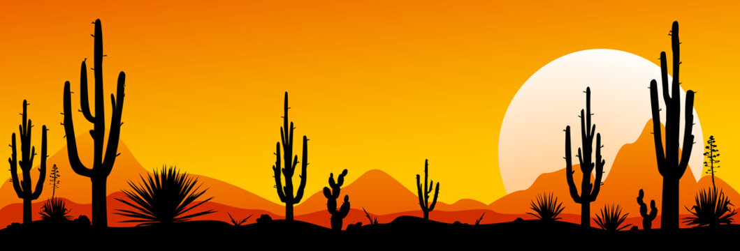 Mexico desert sunset. The stony desert
