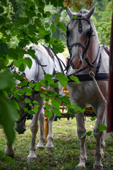 Horses rest in the shade of wood