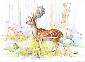 a deer in a light forest