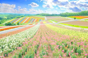 beautiful  landscape in biei