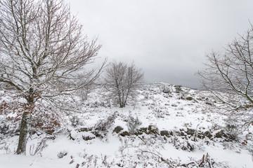 Snowfall in Galicia, Spain.