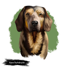 Alpine Dachsbracke dog digital art illustration isolated on white background. Small breed of dog of the scent hound type originating in Austria. Bred to track animals. Slight resemblance to Dachshund