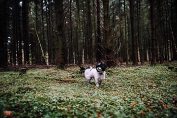 Ausflug in den Rüstjer Forst mit Hund