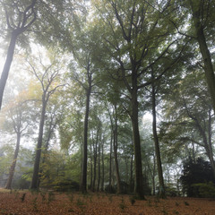 Laubald im Nebel,  Rombergpark, Dortmund, Nordrhein-Westfalen, Deutschland, Europa
