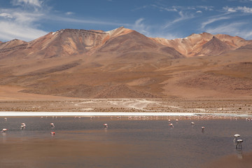 A peaceful scenery with flamingos and a volcano in the background