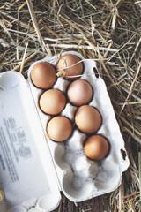 fresh eggs on straw in chicken coop.