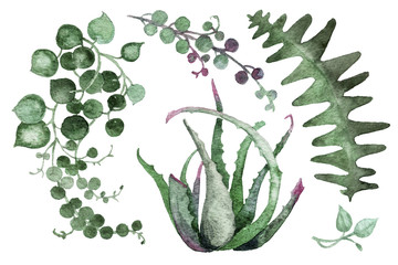 Delicate pearl watercolor succulents in a light Scandinavian style.